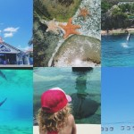 Fun on the Gold Coast: Sea World, Wet'n'Wild & WhiteWater World