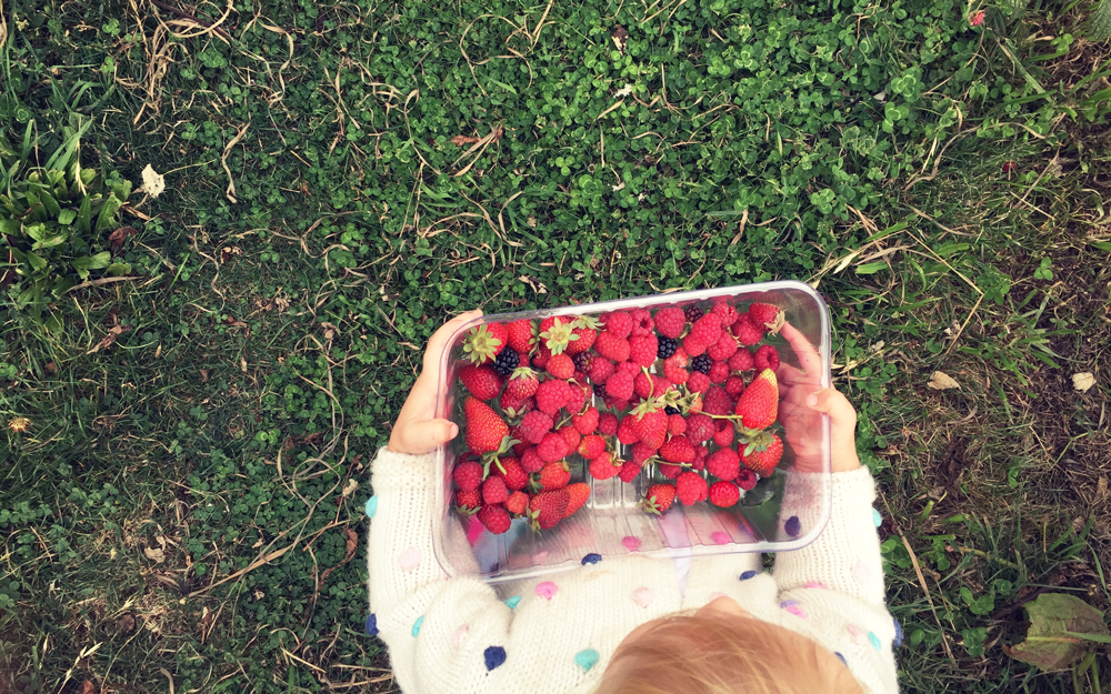 berry-picking