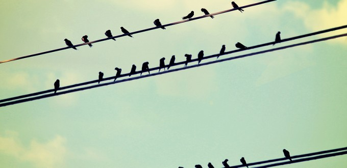 birds on wires over blue sky with clouds background toned with a