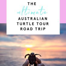 The Ultimate Turtle Tour Road Trip