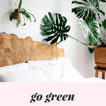 The Top 10 Indoor Plants To Decorate Your Home